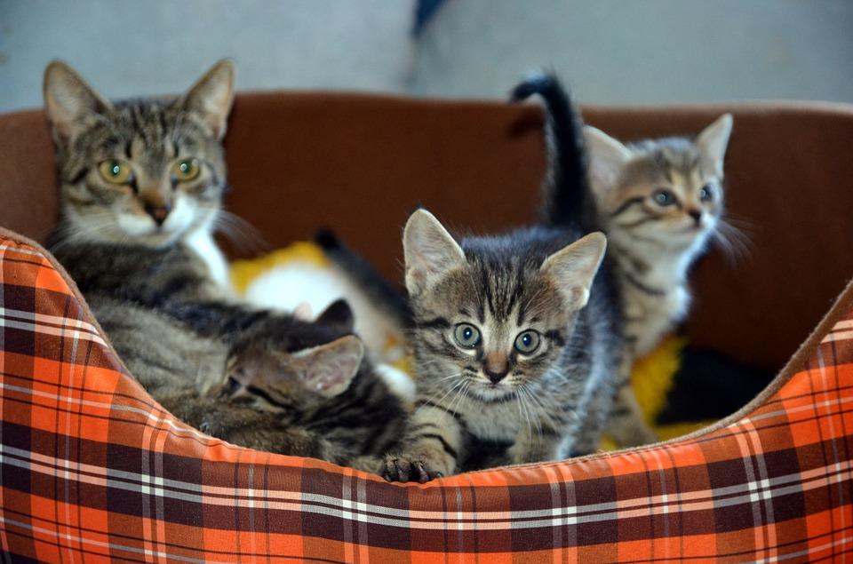 7 bonnes raisons d'avoir un chat